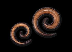 Mixed Teak & Sono Wood Spiral